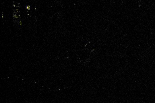 ヒメボタルの発光