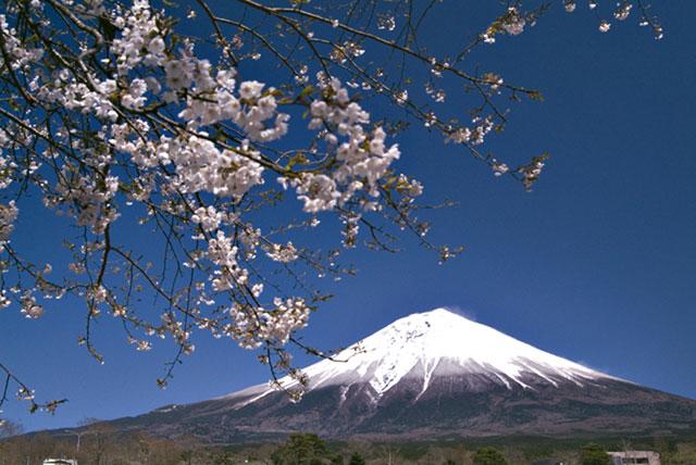 富士桜自然墓地公園 4月14日