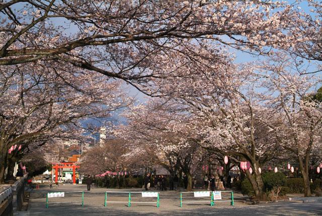 3月28日の桜-1