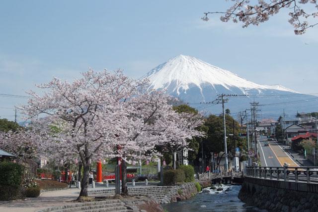 3月29日の桜-1