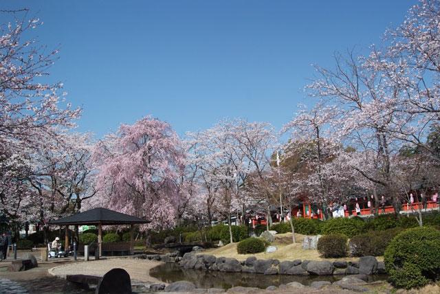 3月29日の桜-2