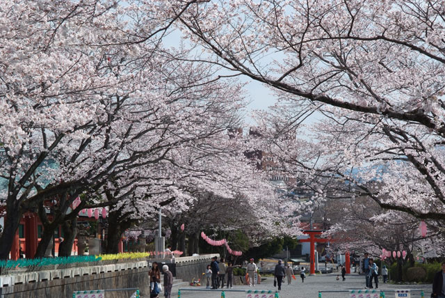 3月29日の桜-3