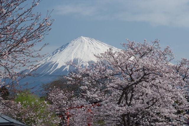 3月29日の桜-4