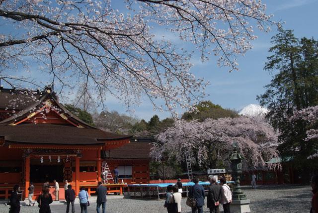 3月29日の桜-5