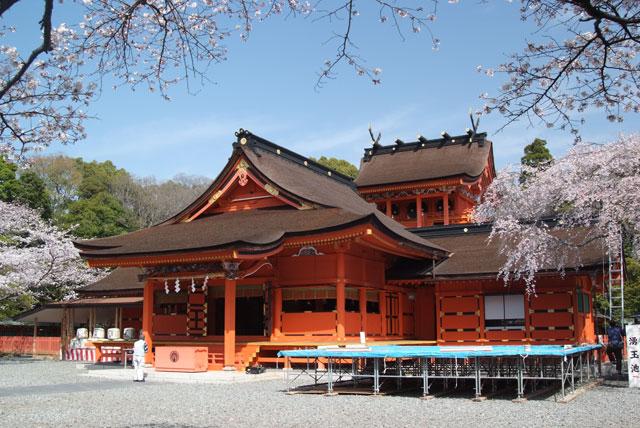 3月29日の桜-6