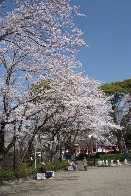 3月29日の桜-7