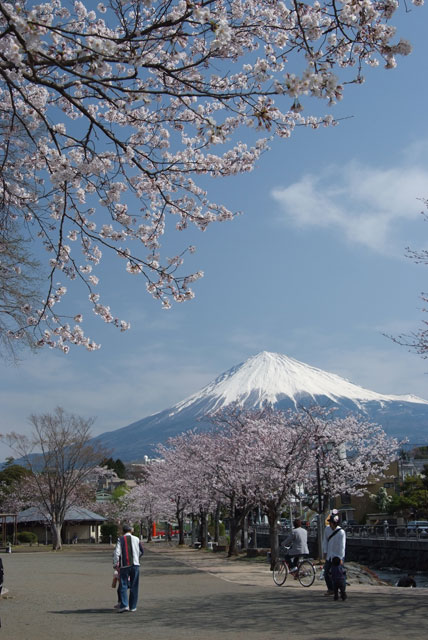 3月29日の桜-8