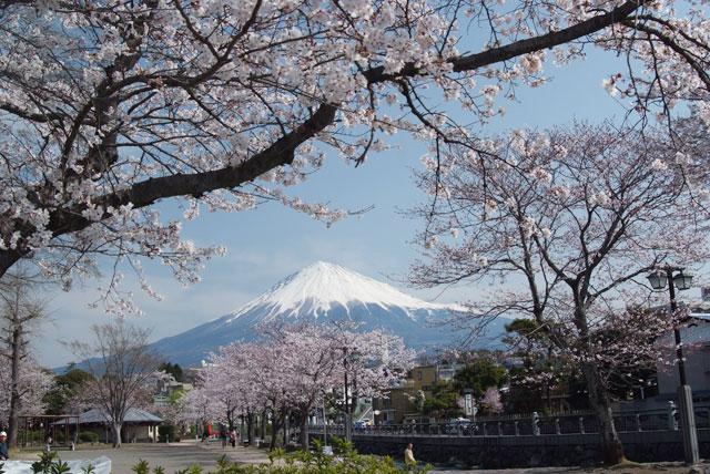 3月29日の桜-9