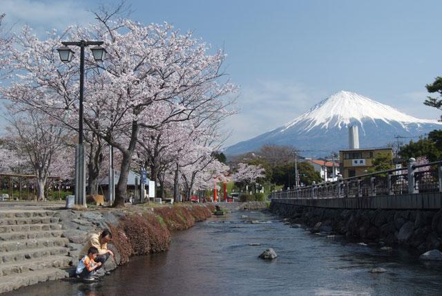 3月29日の桜-11