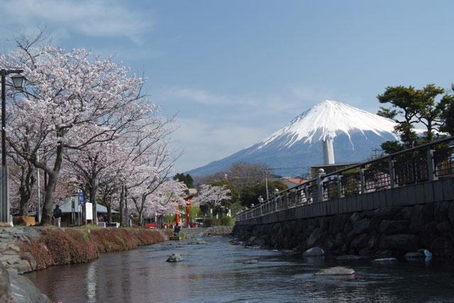 3月29日の桜-12