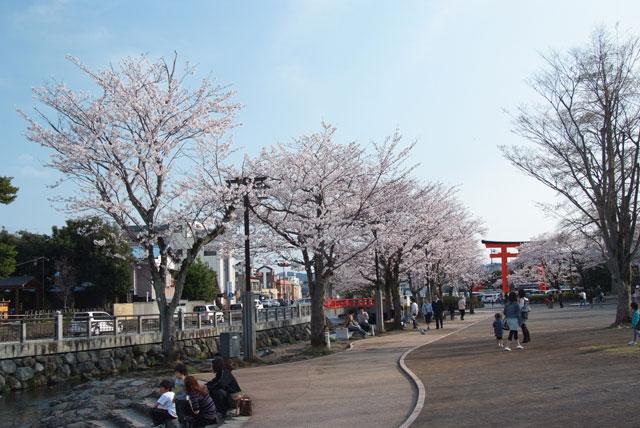 3月29日夕方の桜-2
