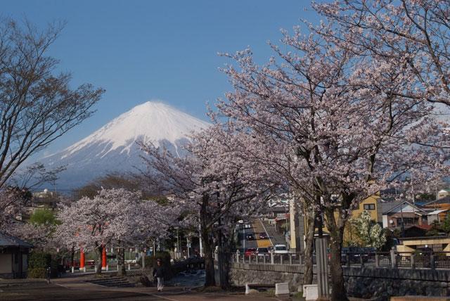 3月31日雨上がりの桜-4