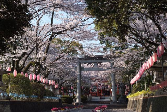 3月31日雨上がりの桜-8