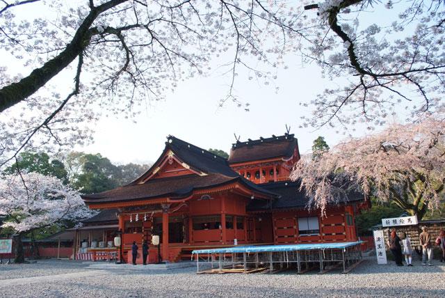 3月31日雨上がりの桜-13