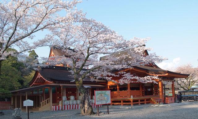 3月31日雨上がりの桜-15