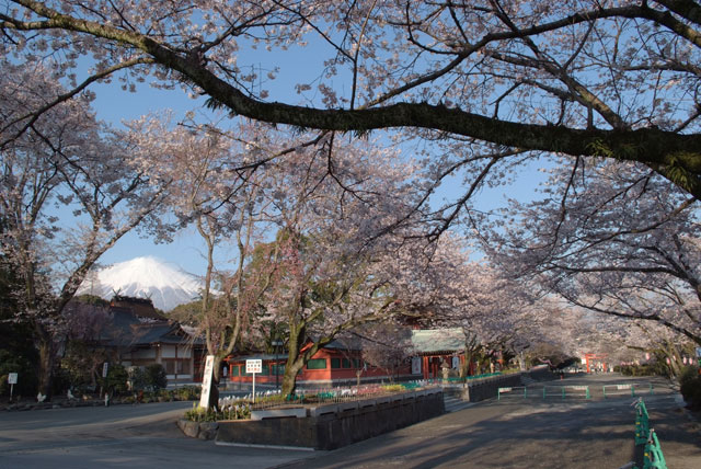 3月31日雨上がりの桜-19