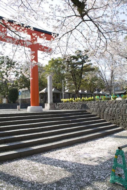 4月3日の桜-2
