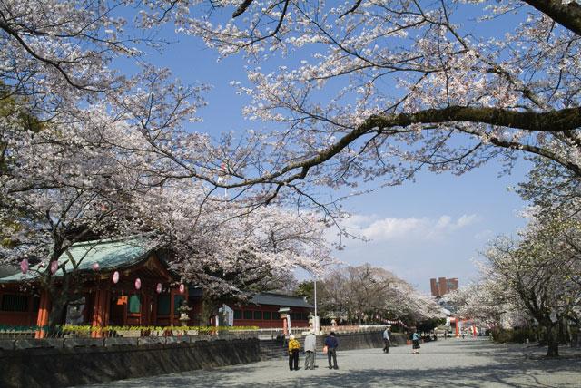 4月3日の桜-4