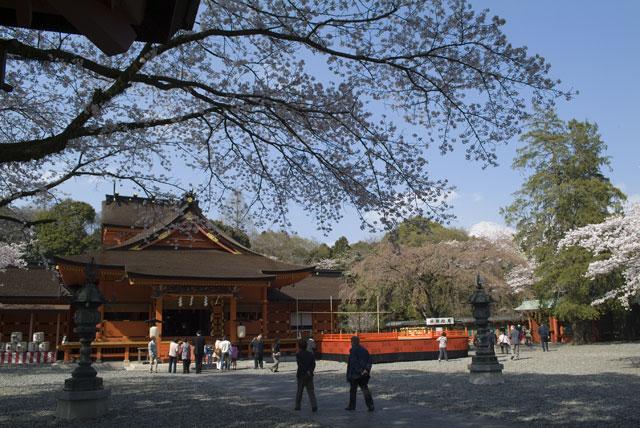 4月3日の桜-6