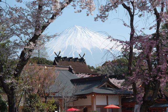 4月6日の桜-1
