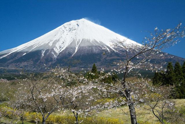 富士桜自然墓地公園 190414-1