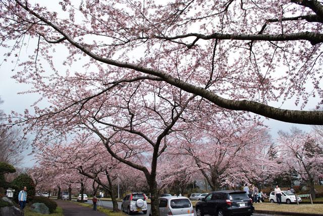 富士桜自然墓地公園-1