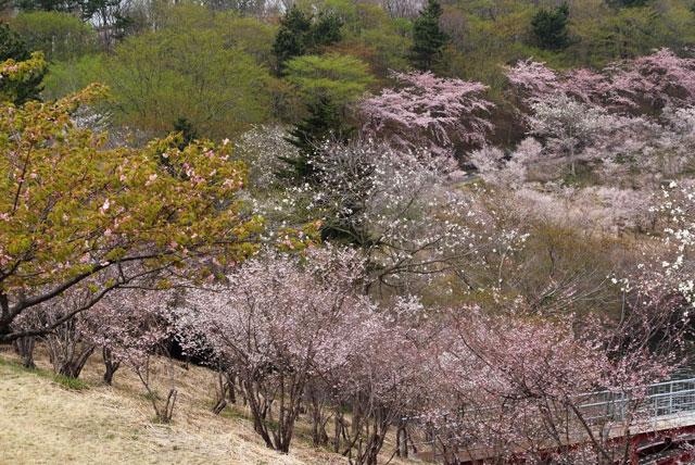 富士桜自然墓地公園-3