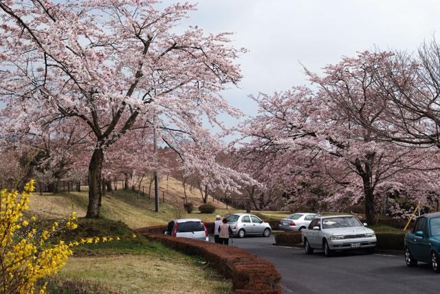 富士桜自然墓地公園-4