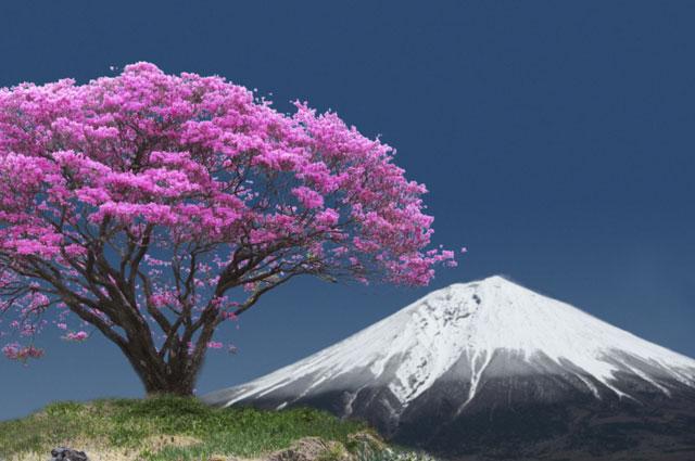 ミツバツツジと富士山(合成)