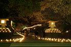 桜の燈回廊-1