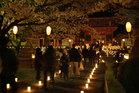 桜の燈回廊-2