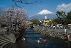浅間大社の桜-3