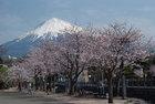 3月29日の桜-14