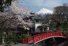 3月29日の桜-18