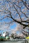 4月1日の青空-10