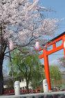 4月3日の桜-8