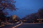 4月5日 舞楽、能と燈回廊-13