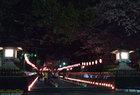 4月5日 舞楽、能と燈回廊-28