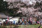 春の菜の花さくらまつり4月13日-2